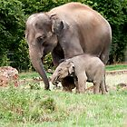 Mum and 1 Year old Baby by Elaine123