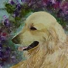 Beautiful Golden Retriever Rufus by Claire Bull