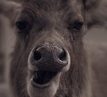 crazy face of a deer. by womoomow
