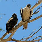 Red-tailed Hawks ~ Paired by Kimberly P-Chadwick