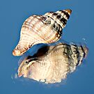 Shell Reflection by Cathy O. Lewis