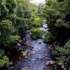 Jungle lushness by john  Lenagan