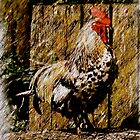 Fine Irish Rooster by bhutch7