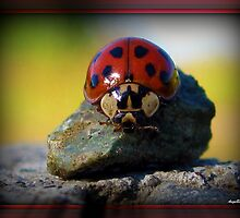 Ladybugs by AngieBanta