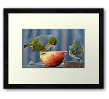 Holding the Apple Up! - Wax Eye NZ - Southland Framed Print