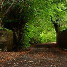 Saturday Morning Stroll by Jim Wilson