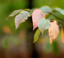 Autumn is here by photographyjen