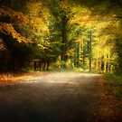 Autumn Lane • Door County by Jigsawman