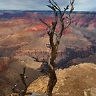 Grand Canyon National Park Old Tree by photosbyflood