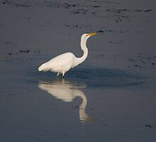 Great Egret by KathleenRinker