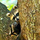Raccoon Siblings by Karen Peron