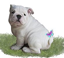 British Bulldog puppy & butterfly by Cazzie Cathcart
