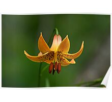 Canada Lily Poster