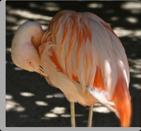 Flamingo Artistry by Kelly Robinson