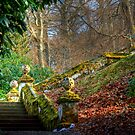 Light on the Steps, Dawyck Botanic Garden by Christine Smith
