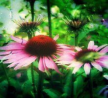 Cone Flowers ©  by Dawn M. Becker