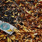 Starbucks Discarded by coffeenoir