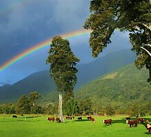 """rainbow I""  flagstaff hereford stud, south westland, nz by rina  thompson"
