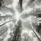 Look up by Bassplayer