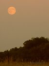 Vintage Moon Landscape  by Barberelli