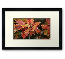 Oh! Those COLORFUL OAK leaves!!! Framed Print