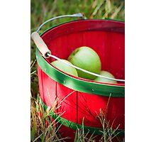 Apple Picking  Photographic Print