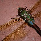 dragonfly photo 3 by Raina DeVaney