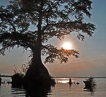 Sunset on Lake Drummond by Michele Conner
