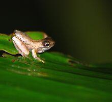 Froglet - Costa Rica by Jason Weigner