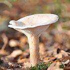 Mushroom In The Woods by David King