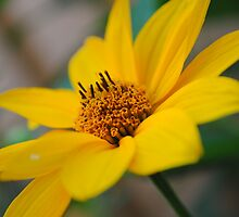 Yellow Close-up by LindzD