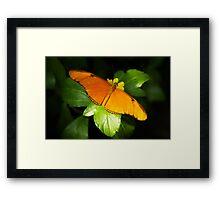A range of Orange Framed Print