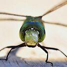 Dragonfly 1 - Ready to Depart Sir by Dennis Stewart