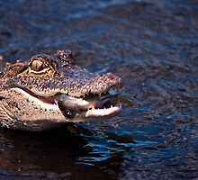 Fortunate Gator, Unfortunate Fish by ejlinkphoto