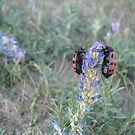 Love bugs - Mongolian countryside by carlyfletch