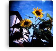 Just Someflowers Doing Their Thing And Doing It So Well Canvas Print