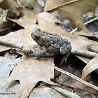 American Toad on a Branch in the Forest by Barberelli