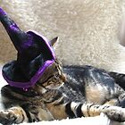 Hocus Pocus Kitty Focus by Ladymoose