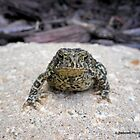 Mr. Toad's Gorgeous Face by Barberelli