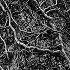 Ivy by Andrey Kudinov