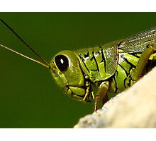 Portrait Of A Grasshopper Photographic Print