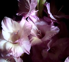 Secretive Gladiolas by trueblvr