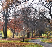 Trees of Autumn II by Mary Tomaselli