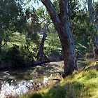 Trees along the Riverbank by Lozzar Landscape