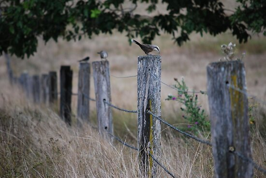 Fence sitters by AzzyPants