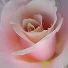 Garden Pleasures - Pastel Pink Rose by Mariaan Maritz Krog Photo Art Studio