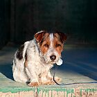 Scruffy Little Dog by Ann J. Sagel