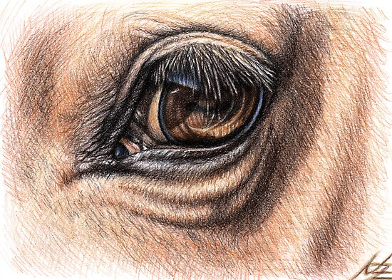 Quarter Horse Head Drawing Horse Eye Drawi...