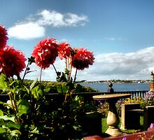 Dahlias at Beauport by Carrie Blackwood