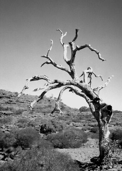 Ancient Tree by Michael John